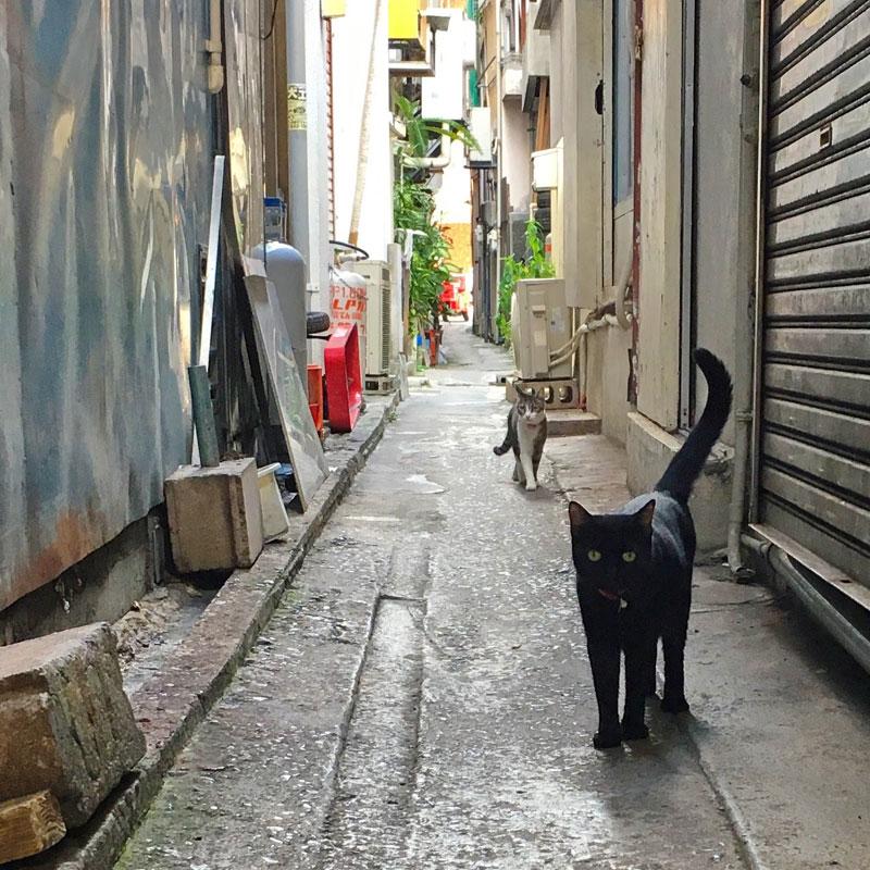 市場の路地裏の猫たち