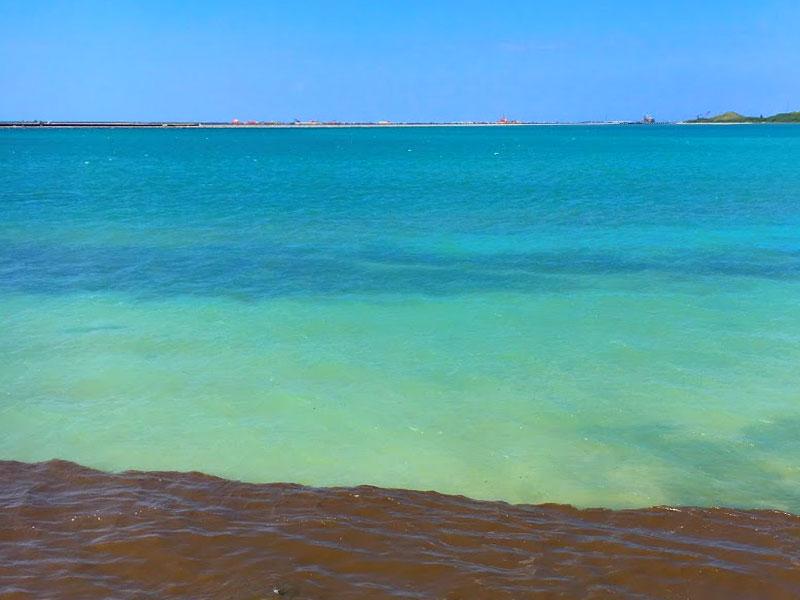 チョコミントの海