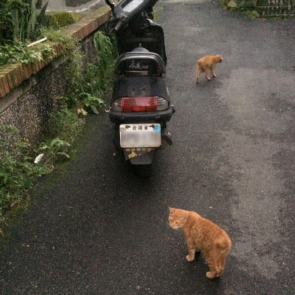 九份の猫たち