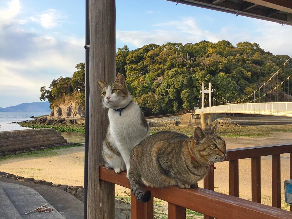 湯の児海岸の猫たち