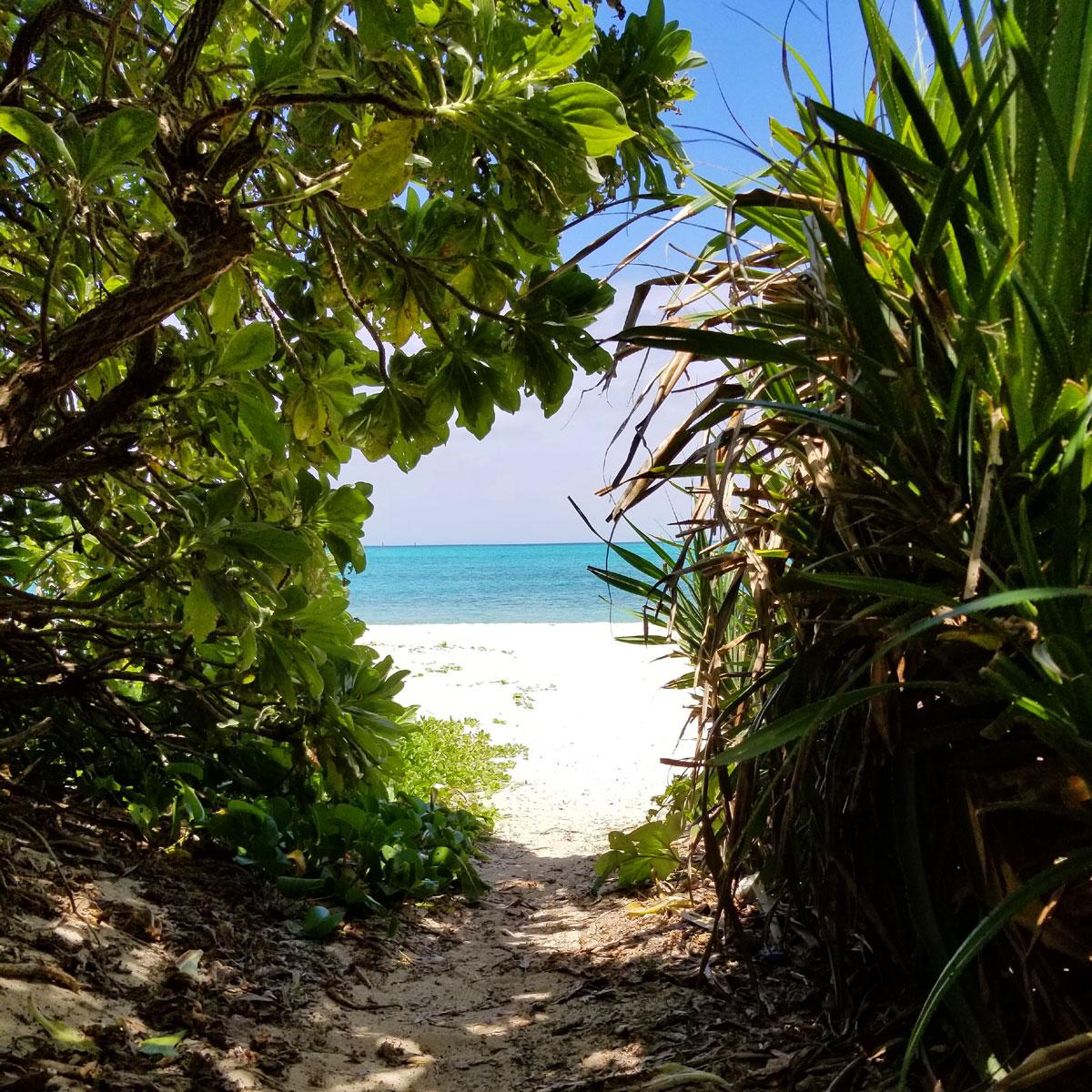 熱帯植物のトンネルを抜けるとお浜