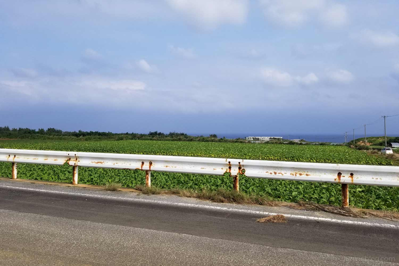 来間島の農道(2019年4月15日撮影)