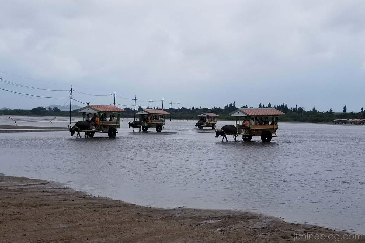 由布島の水牛車部隊