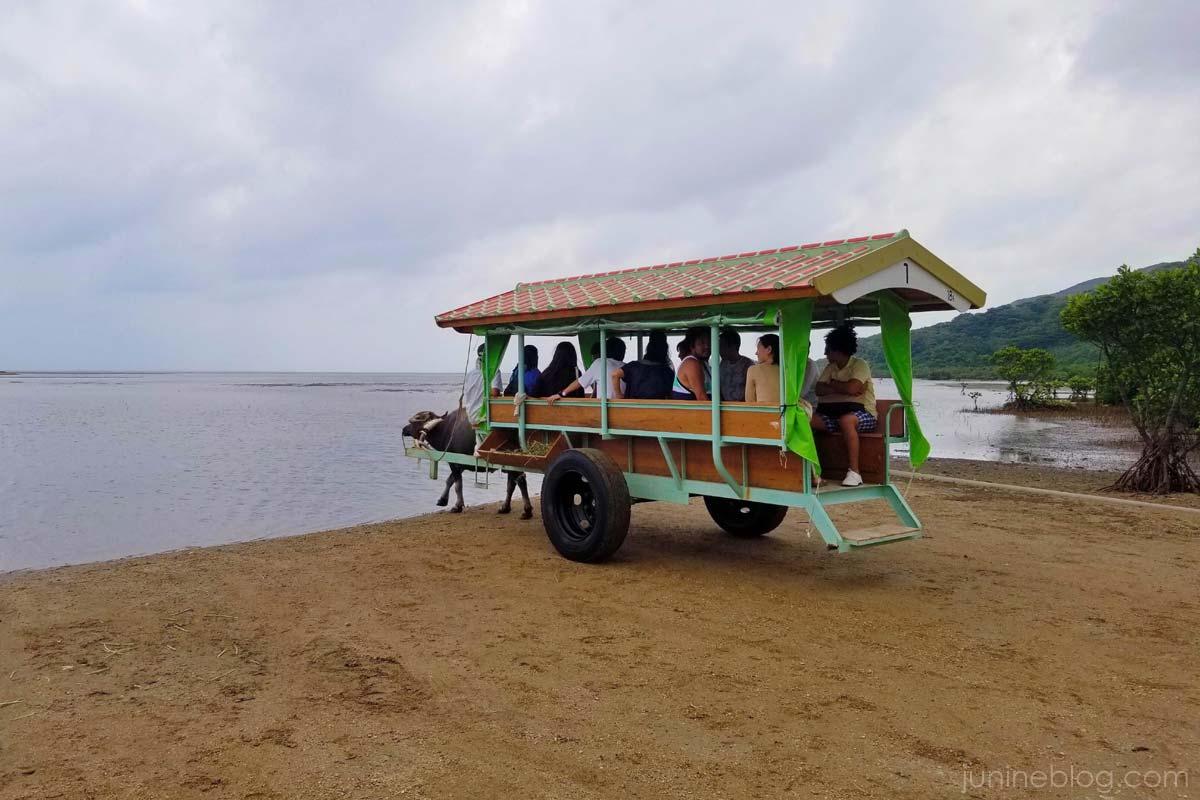 海へと歩き出す由布島の水牛車
