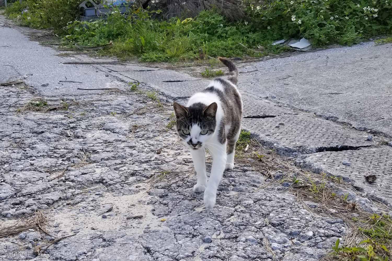 瀬底島・アンチ浜の猫