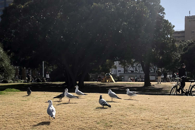 山下公園の鳥たち